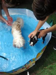 Get a paddling pool for the pups