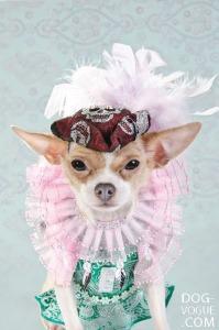 Dog-Vogue01