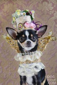 Dog-Vogue02