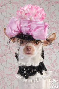 Dog-Vogue03
