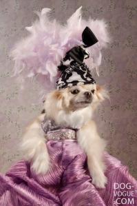 Dog-Vogue04