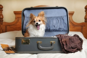 dog-in-suitcase (1)
