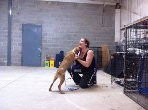 """Day 1 working with an """"aggressive"""" pitbull puppy"""