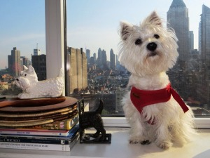Nothing beats a Manhattan skyline view for these pampered pets