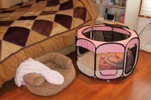 Yum Yum and Lollipop have their own beds